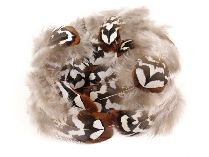 Craft Feathers & Unusual Gift ideas