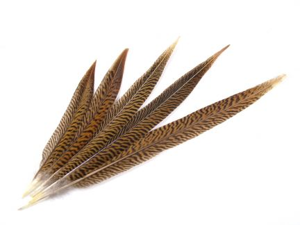 Natural Golden Pheasant Feathers