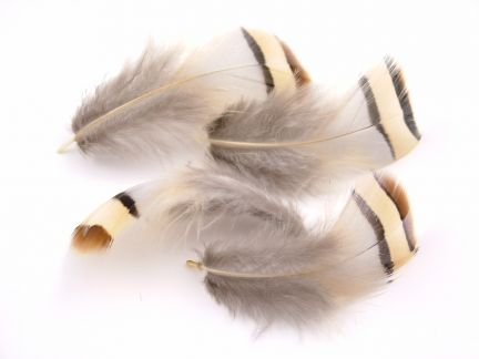 Delicate Partridge Feathers
