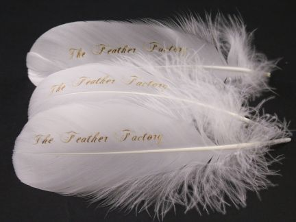 Personalised Feathers and Pens