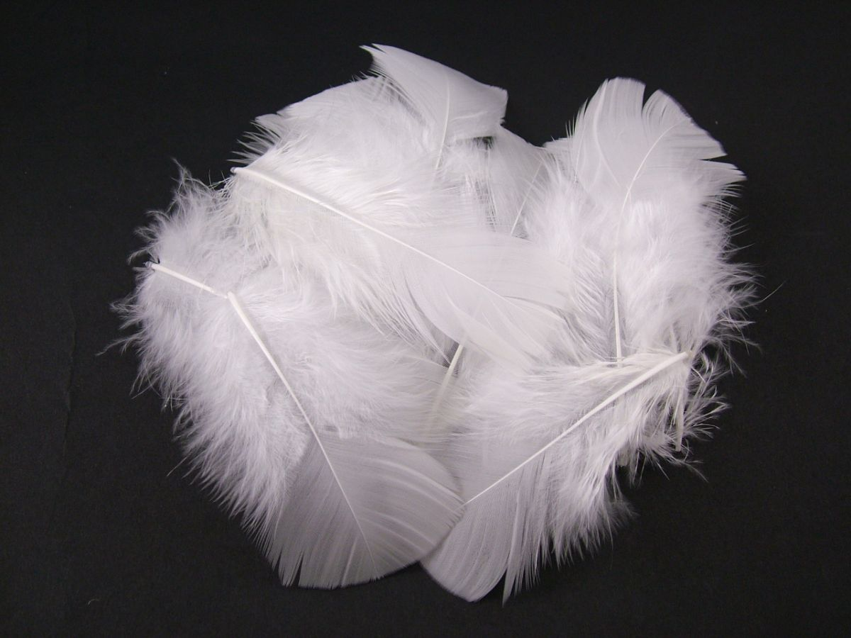 White craft feathers bulk - Turkey Coquille Craft Feathers 20g Pack Image 4