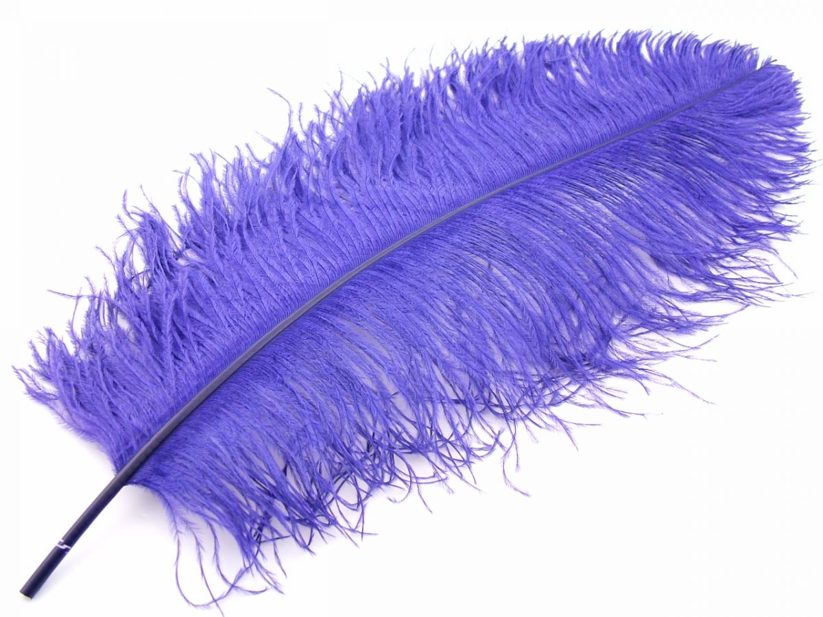 Ostrich Premium Wing Feather 50 65cm Image 1