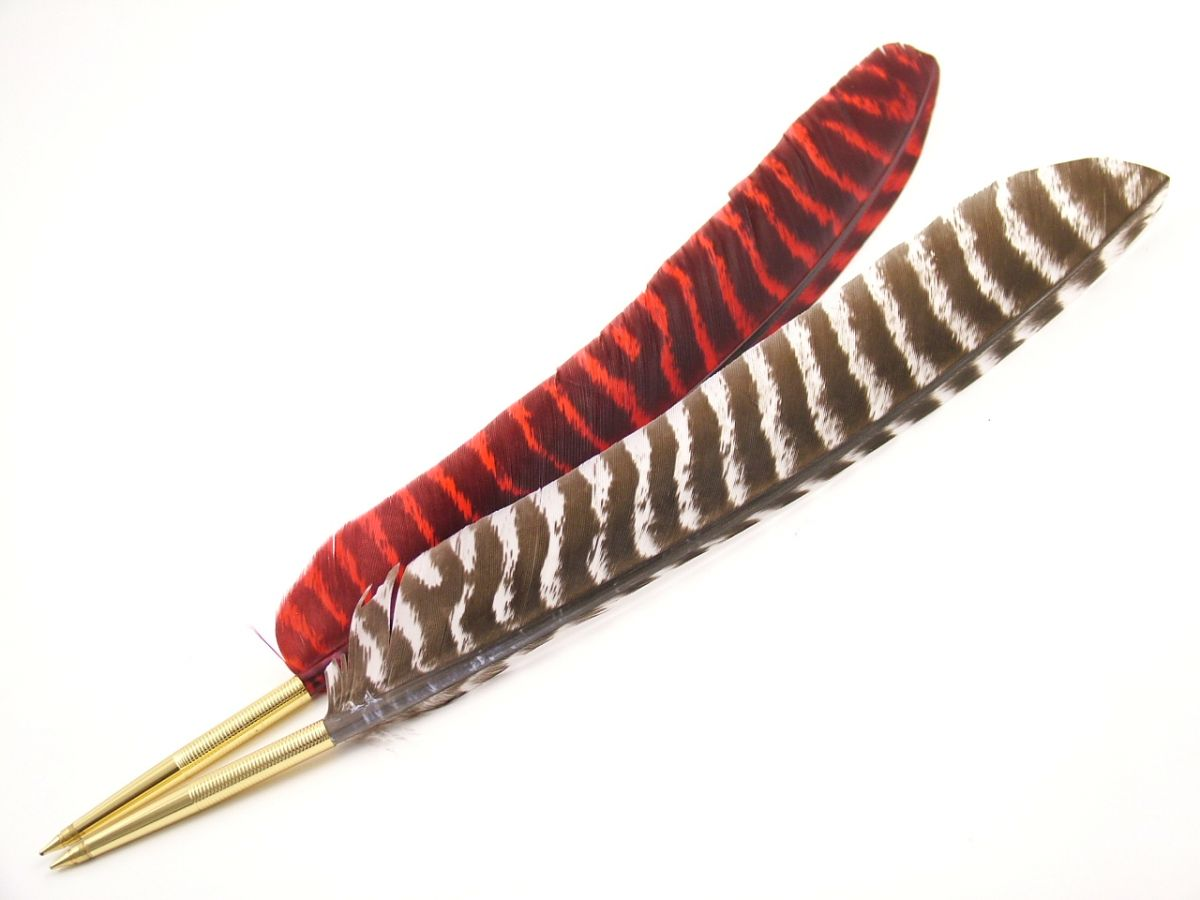 Zebra Pointer Pen Naturally Striped Turkey Wing Feather