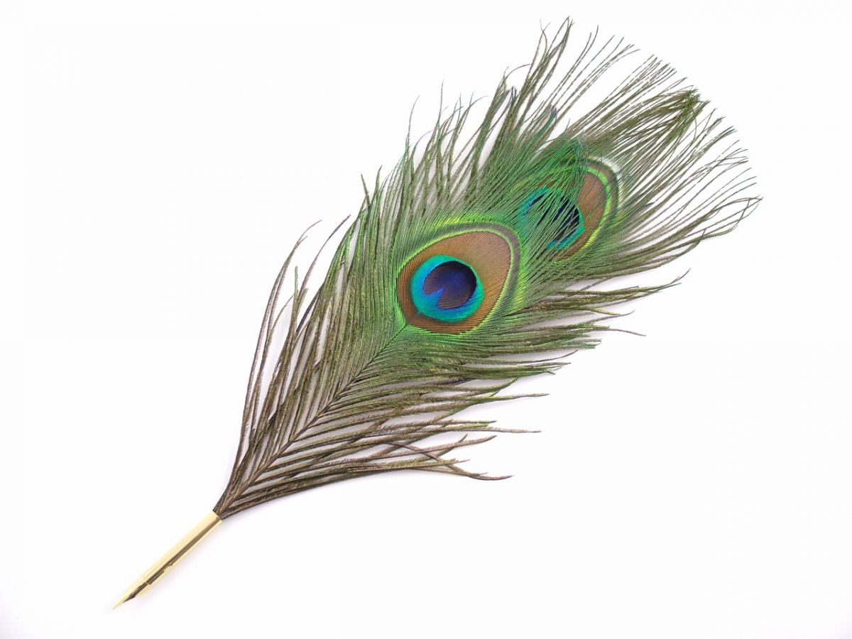 Single peacock feather wallpapers
