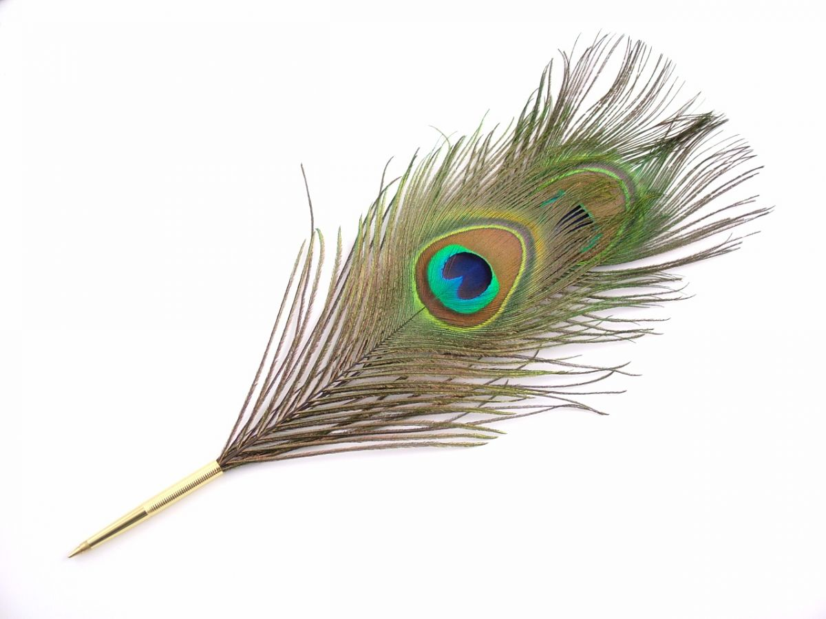 pavo single mature ladies Feather lice typically live on a single host and can move  events such as weddings and ladies day at  and so is not present in the scales of mature.