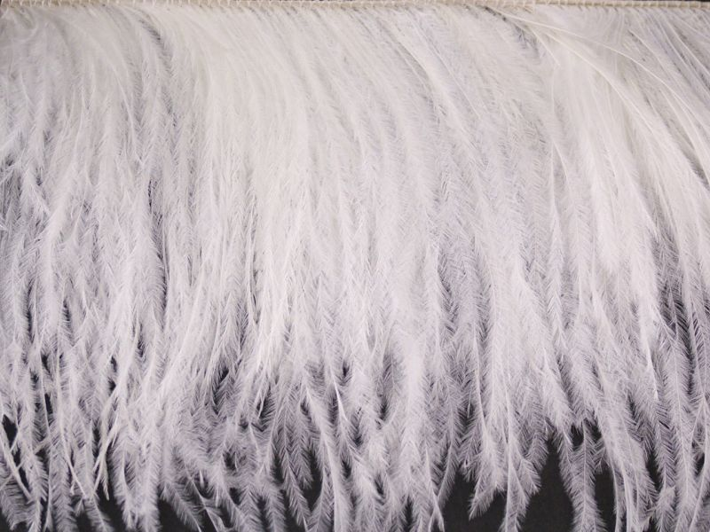 Ostrich Feather Fringe - 2 Ply on a Cord 3