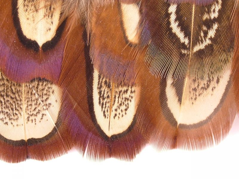 Pheasant Churchwindows Feather Fringe 2