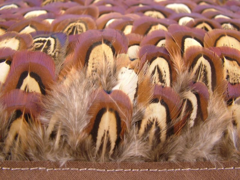 Pheasant Churchwindows Feather Fringe 3