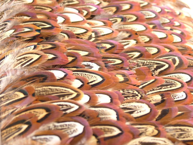 Pheasant Churchwindows Feather Fringe 4