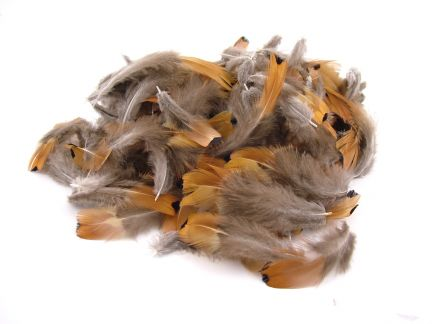 Gold side Plumage (10g Pack)