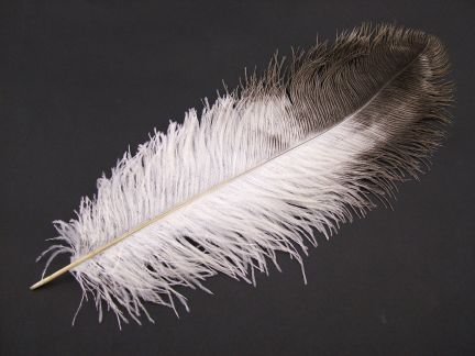 Natural Ostrich Wing Feather (50-65cm)
