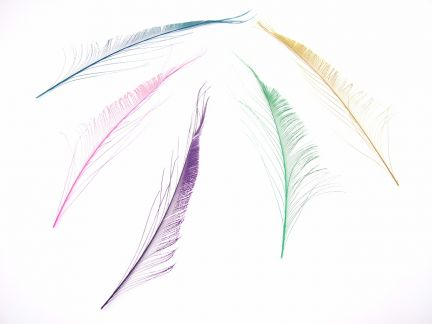 Dyed Peacock Feathers - Sword (Pack of 5)