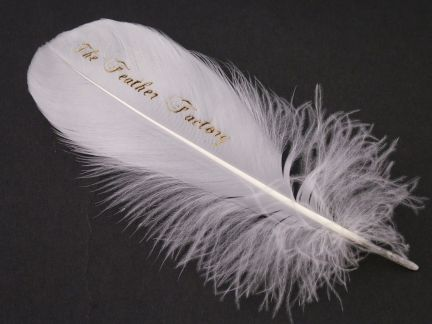 Invitation Feather (Pack of 10)