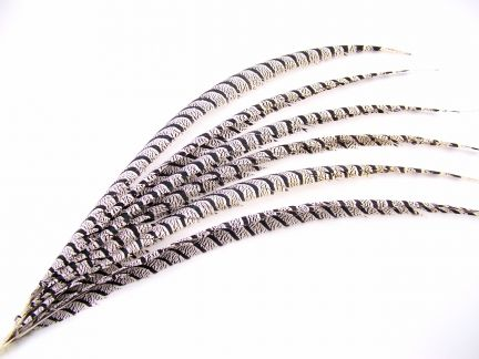 Lady Amherst Pheasant Feather - Centre (90-100cm)