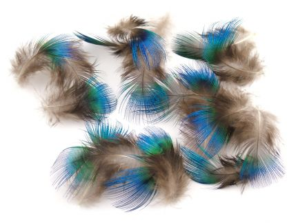 Blue Peacock Plumage (1g Pack)