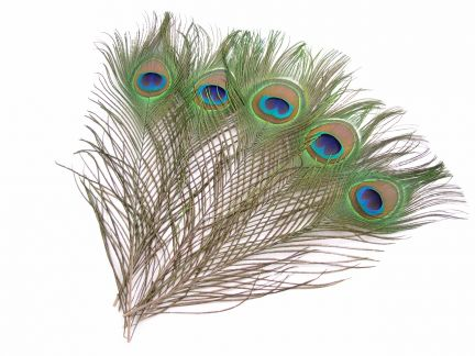 Peacock Feather Craft Pack - Eyes (Pack of 5)