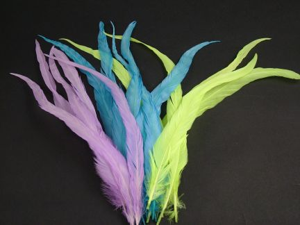 Coque Feathers (Pack of 12)