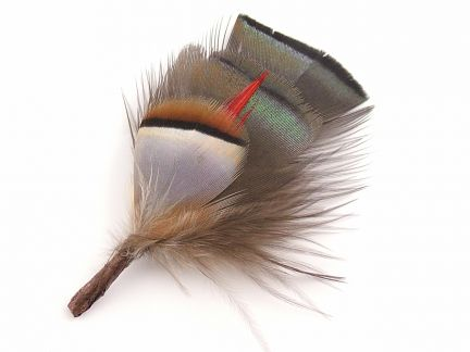 Traditional Feather Hat Mount