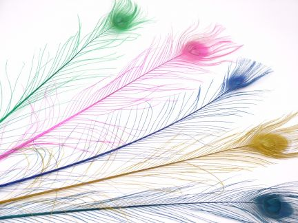 Dyed Peacock Tail Feathers (Pack of 5)