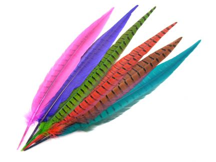 Dyed Pheasant Side Tail Feather (Pack of 5)
