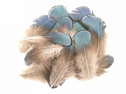 Lady Amherst Blue Plumage Feathers (1g Pack)